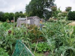Allotment%20diary